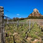 The Burgundy Alternatives