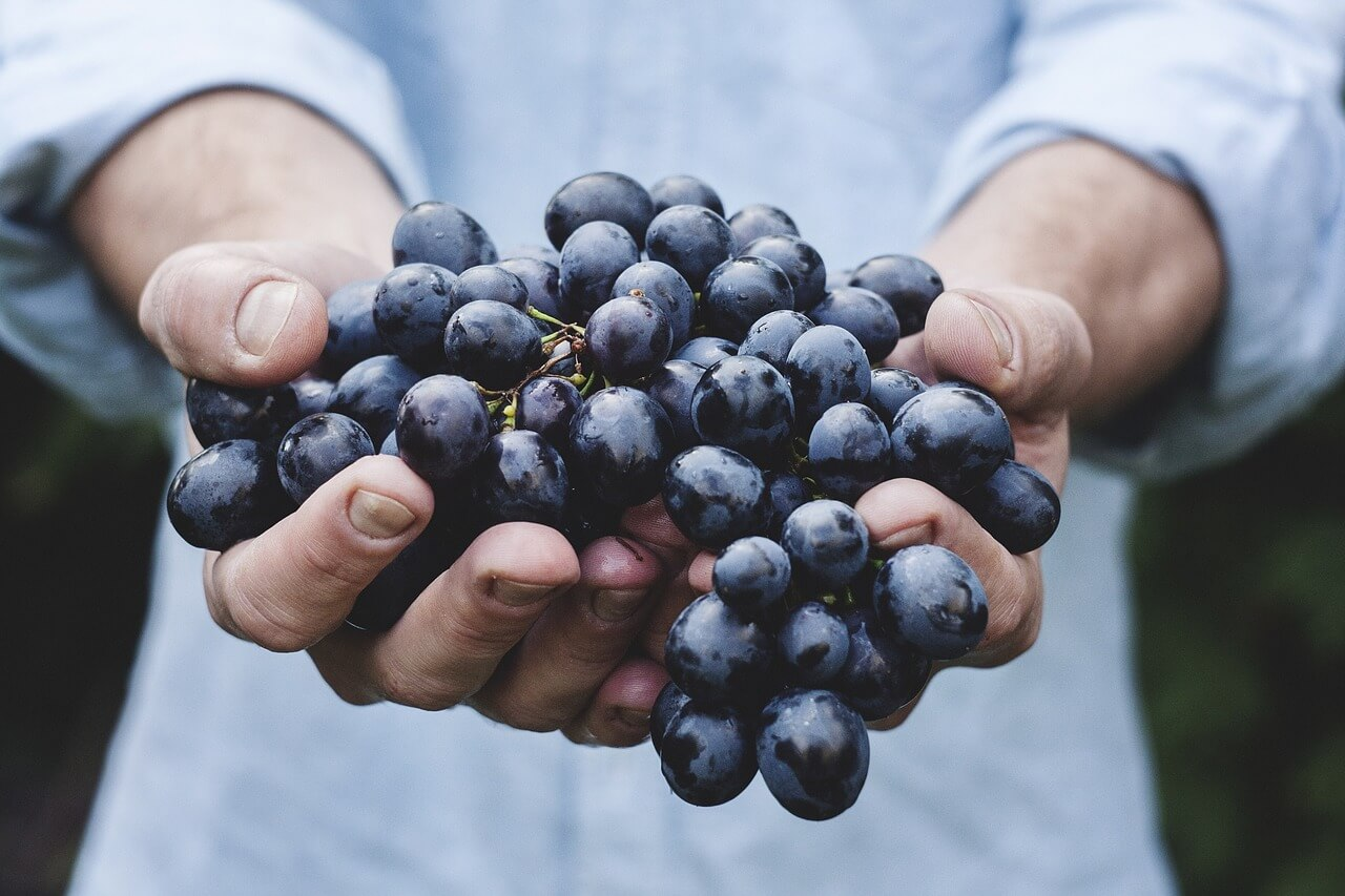 organic grapes in hand
