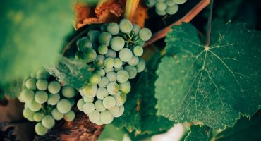 Organic Wine vs Natural Wine