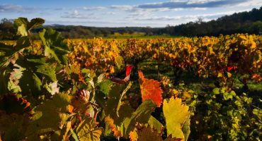 The Magic of Biodynamic Wine
