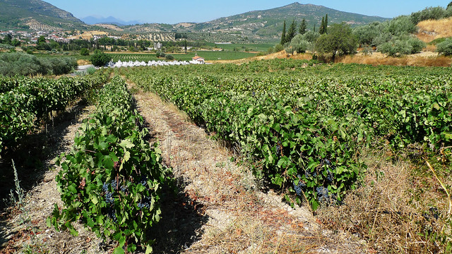 Vineyards in Nemea, Greek Wine Region