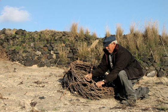 Greek Wine Making - Basket 'Kouloura' Vine Weaving on Santorini