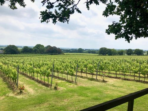 View across Boot Hill vineyard at Gusbourne's winery in Kent.