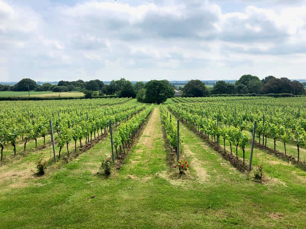 Gusbourne Vineyard Kent