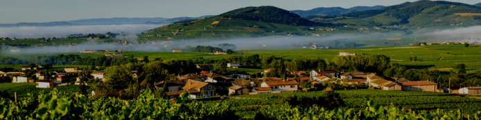 Getting the most out of Beaujolais
