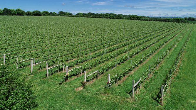 Meet The Winemaker: Tommy Grimshaw, Langham Wine Estate